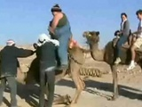 Fat Chick On A Camel