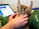 Strange Animal Getting Tickled