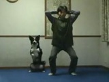 Funny Asian Squatting Dog