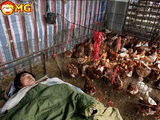 Sleeping In The Chicken House