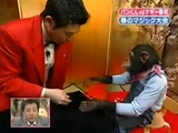 Doing Magic On A Monkey