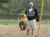 The Swinging Dog