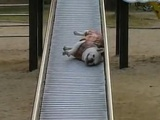 Dog Goes Down Slide In A Cool Way