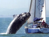 Killer Whale Crushes Sailboat