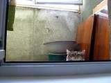 The Peeping Tom Cat