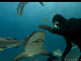 Most Awesome Shark Video You Will See This Year