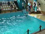 Hilarious Brawl In The Oceanarium In Russia