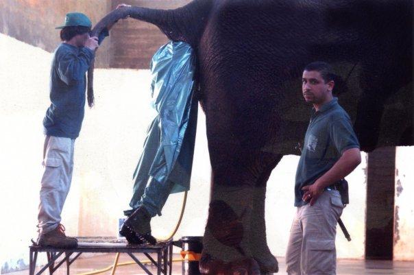 elephant-ass