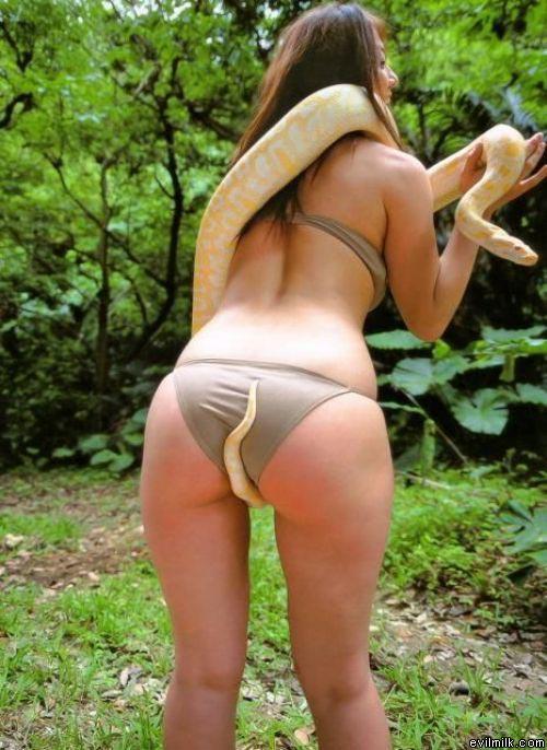 asian-babe-snake-13