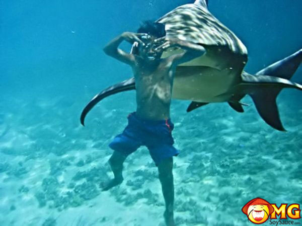 shark swimming with man