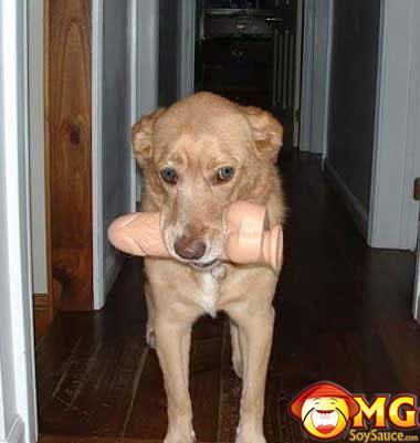 dog-finds-dildo