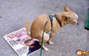 dog-poo-on-magazine-funny