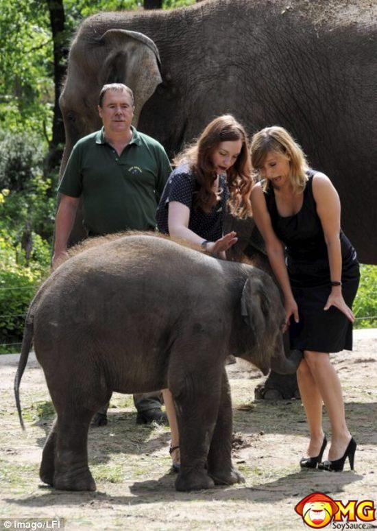 elephant-upskirt