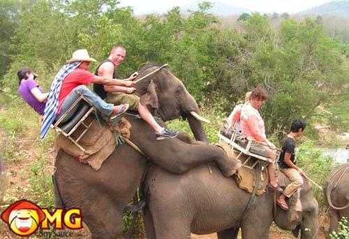 elephants-backing-ass-up