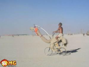 funny-camel-bike