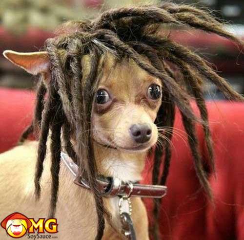 funny-dog-hair