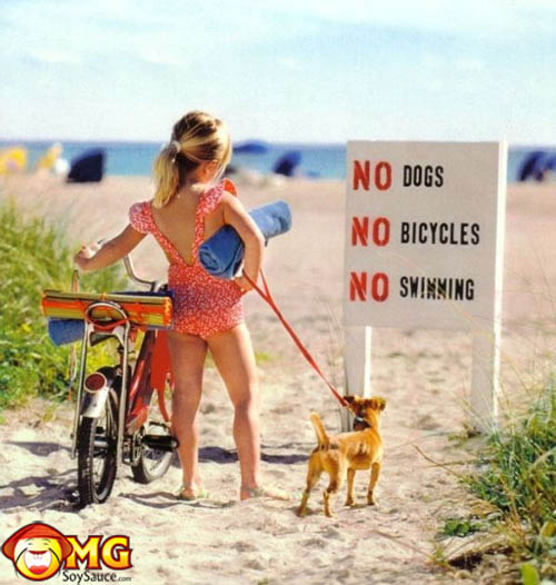 no-dogs-bicycles-swimming-funny-signs
