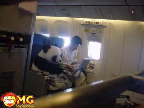 panda-airplane-seat