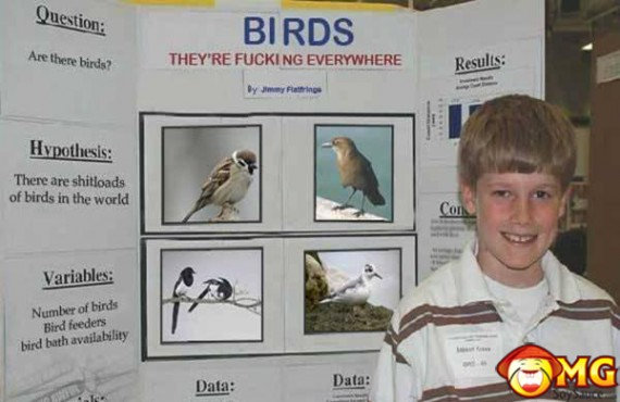 birds-their-fucking-everywhere-projects