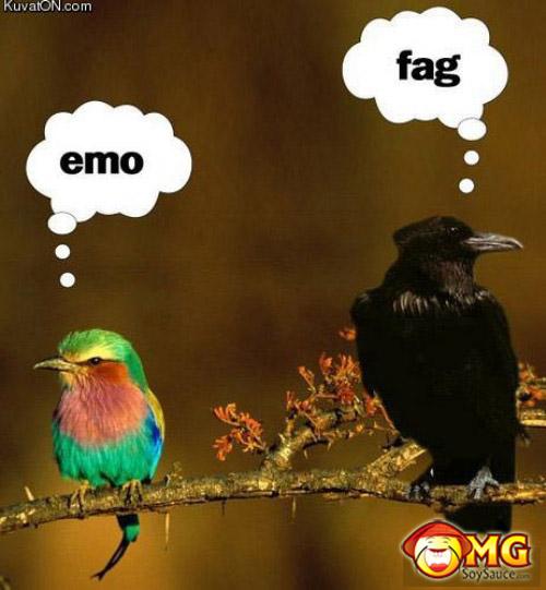 funny-emo-fag-birds-pics