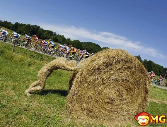 funny-haystack