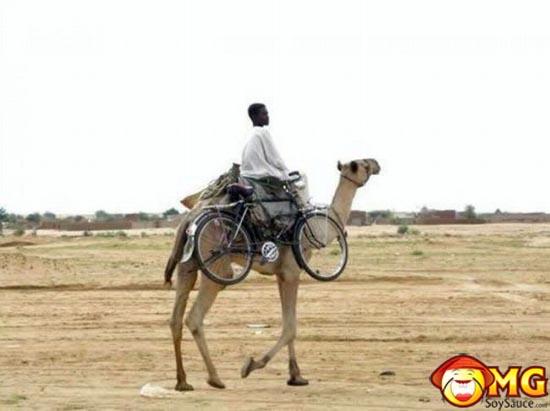 camel-bike-transporter