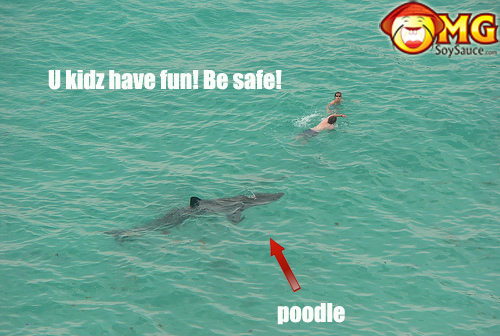 scary-shark-swimmer-picture