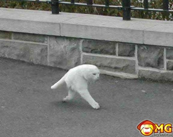 2-leg-cat-random-pictures