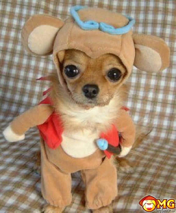 chihuahua-costume-puppet