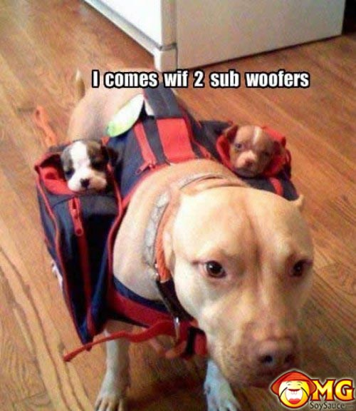 funny-random-dog-puppies