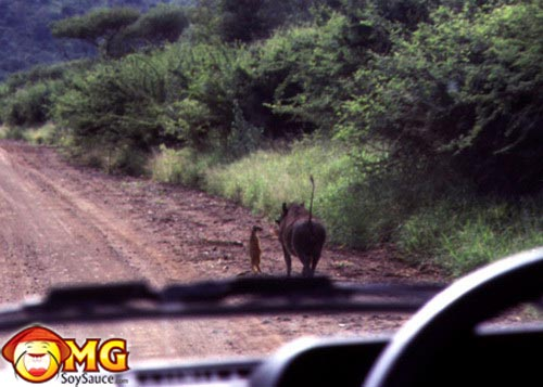real-life-timon-pumbaa