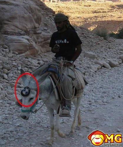 bmw-horse-funny-random