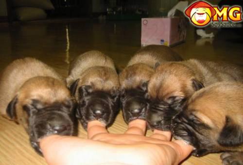 dog-suck-on-fingers