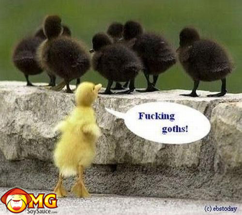funny-chicks-birds-goth-yellow