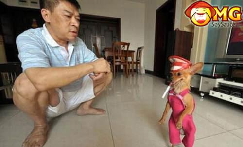 random-asian-pictures-dog-smoking