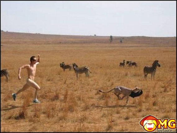random-funny-cheetah-picture