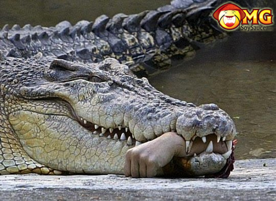 alligator-arm
