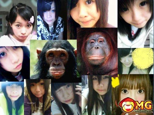 asian-gorilla-monkey-pose
