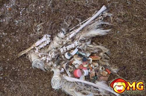 bird-dies-with-trash-in-stomach-0