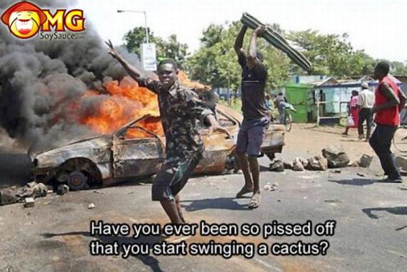 cactus-swing