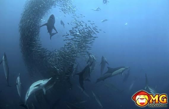 sardine-run-nature-beautiful