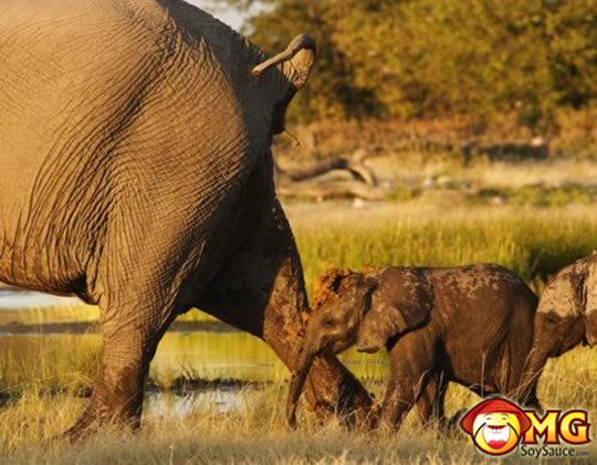 baby-elephant-poop
