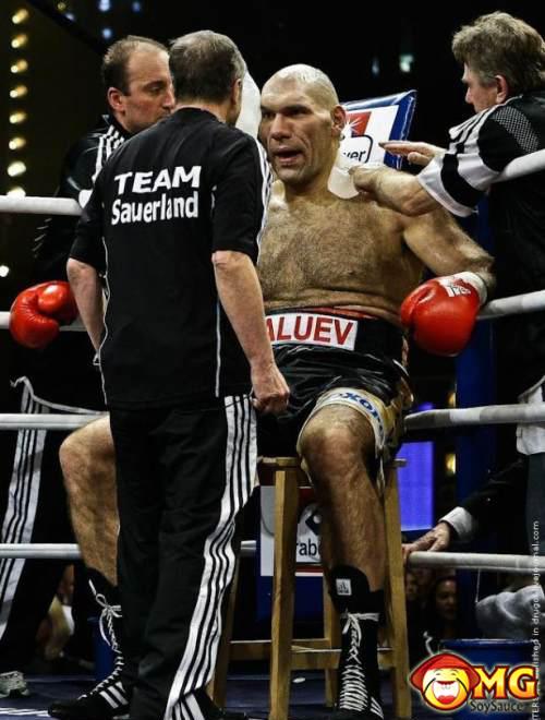 huge-boxer