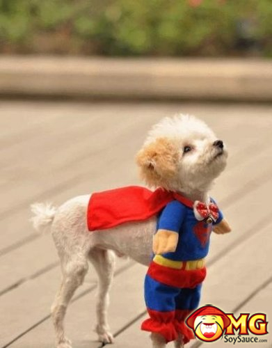 superman-dog-costume