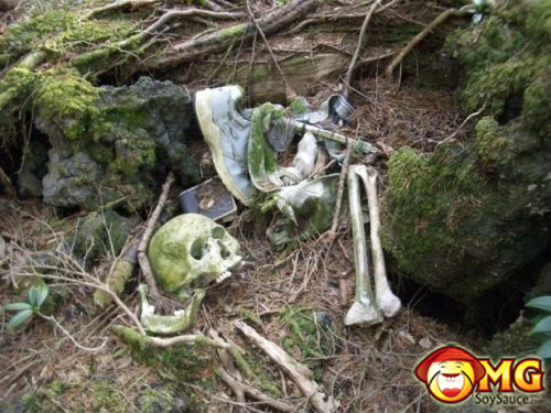 12-aokigahara-suicide-forest-pictures-photos