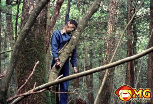 13-aokigahara-suicide-forest-pictures-photos