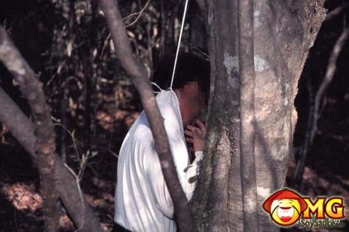 18-aokigahara-suicide-forest-pictures-photos