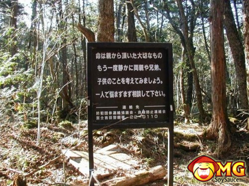 2-aokigahara-suicide-forest-pictures-photos