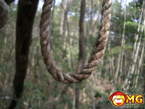 3-aokigahara-suicide-forest-pictures-photos