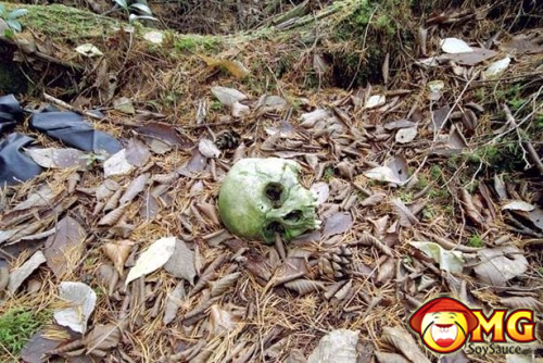 6-aokigahara-suicide-forest-pictures-photos